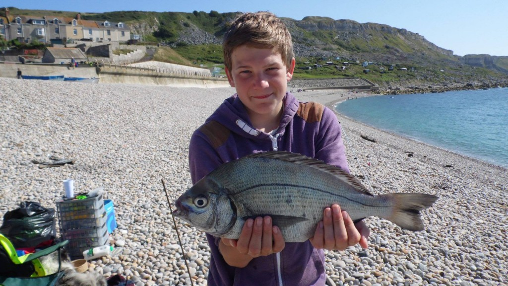 Huge Bream