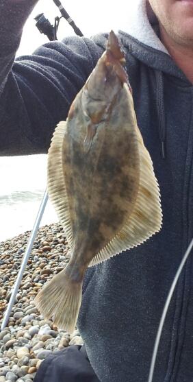 Flounder red