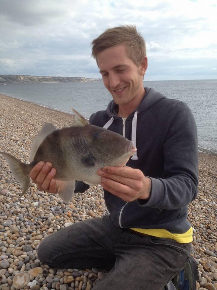Trigger fish Dave Barrat
