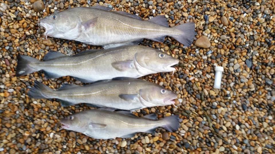 Cod four